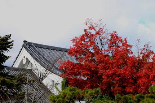 紅葉だより52嵯峨大覚寺と覚勝院_e0048413_20532535.jpg