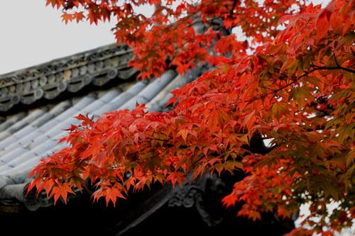 紅葉だより52嵯峨大覚寺と覚勝院_e0048413_20542941.jpg