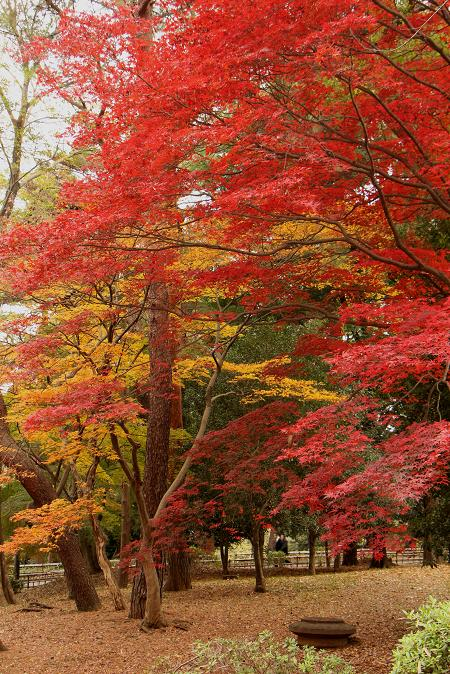 初冬 まだ紅葉が。。。_d0150720_1162914.jpg