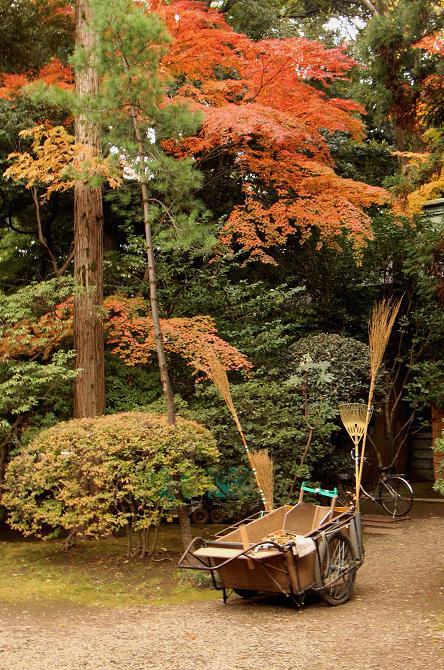 初冬 まだ紅葉が。。。_d0150720_1172077.jpg