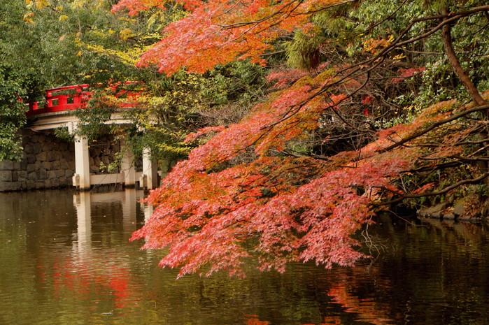 初冬 まだ紅葉が。。。_d0150720_118188.jpg