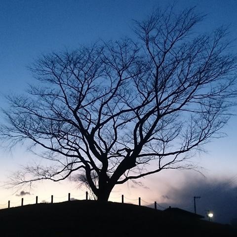 大きな桜の木に思いをはせて・・・_f0240834_20393769.jpg