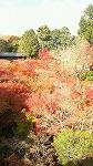 紅葉も終わりですね~_d0118053_16292864.jpg