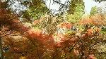 紅葉も終わりですね~_d0118053_16311068.jpg