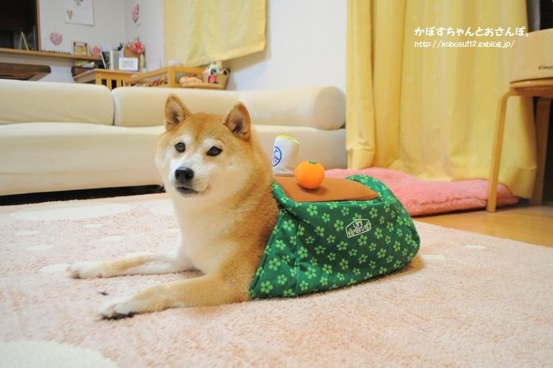 こたつ猫・こたつ犬_a0126590_21585683.jpg