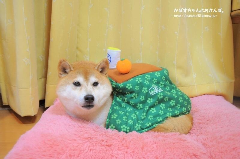 こたつ猫・こたつ犬_a0126590_21590261.jpg