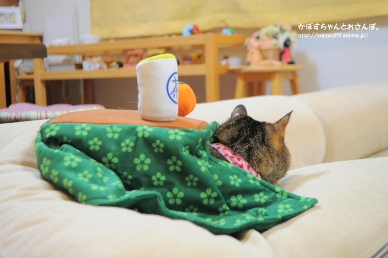 こたつ猫・こたつ犬_a0126590_21595819.jpg