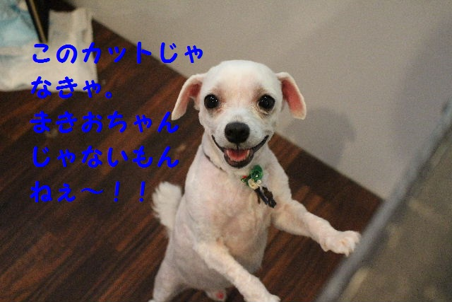 b0130018_0451738.jpg