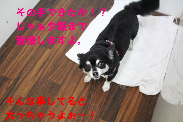 b0130018_0511430.jpg