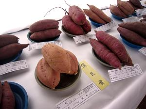 農畜産物品評会 第一日目_c0141652_17444815.jpg
