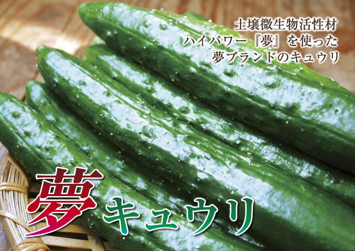 新鮮野菜スティックにも大好評!朝採りキュウリ、セロリ、ニンジン販売中!!_a0254656_16382370.jpg