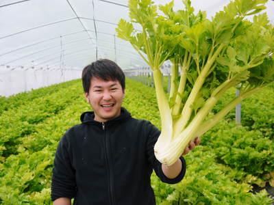 新鮮野菜スティックにも大好評!朝採りキュウリ、セロリ、ニンジン販売中!!_a0254656_1824211.jpg