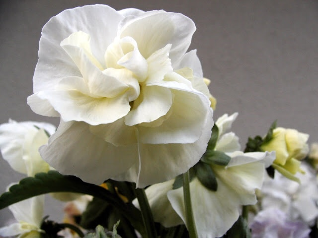 花たちがたくさんの人を繋げてくれます_b0137969_06241401.jpg