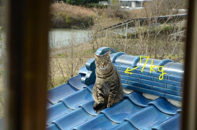 猫なんか呼んでないのに来るが、呼べば来ない_a0158478_10520288.jpg