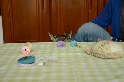 猫なんか呼んでないのに来るが、呼べば来ない_a0158478_10565284.jpg