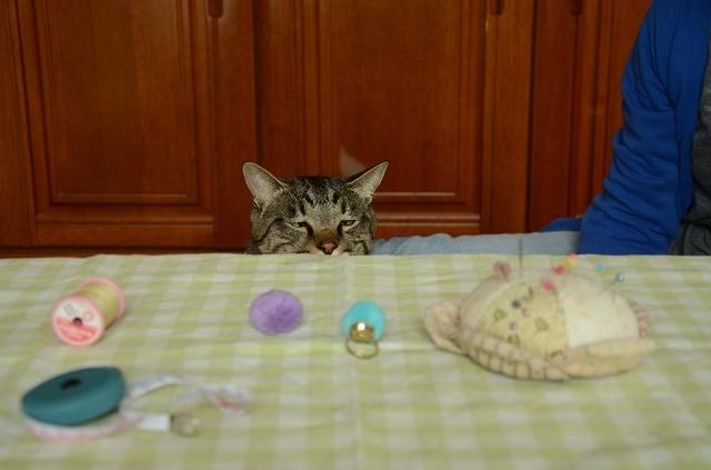 猫なんか呼んでないのに来るが、呼べば来ない_a0158478_11021472.jpg