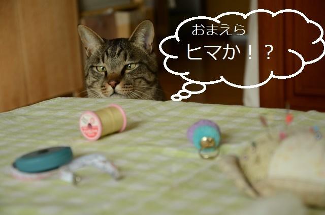 猫なんか呼んでないのに来るが、呼べば来ない_a0158478_11130221.jpg