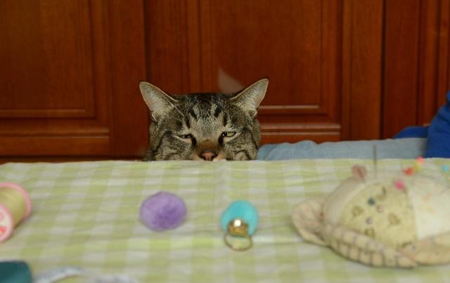 猫なんか呼んでないのに来るが、呼べば来ない_a0158478_11535833.jpg