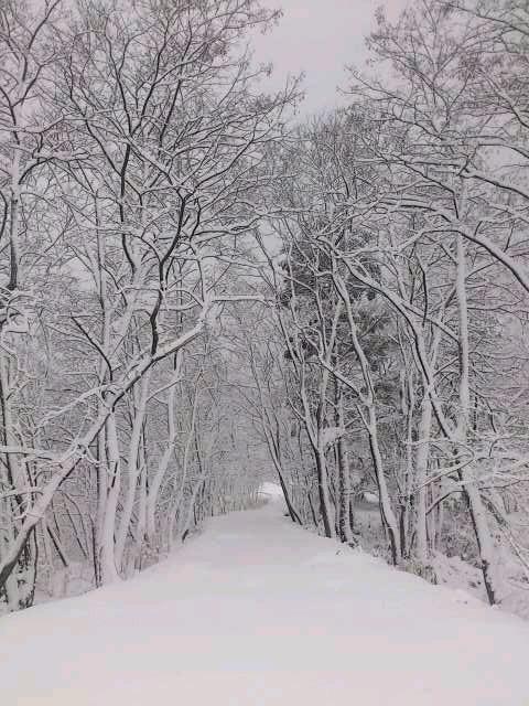 暖冬_e0079589_14405378.jpg