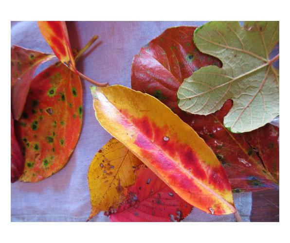 落ち葉のモビール・幼児クラス(比良・上高野)_f0211514_18252495.jpg