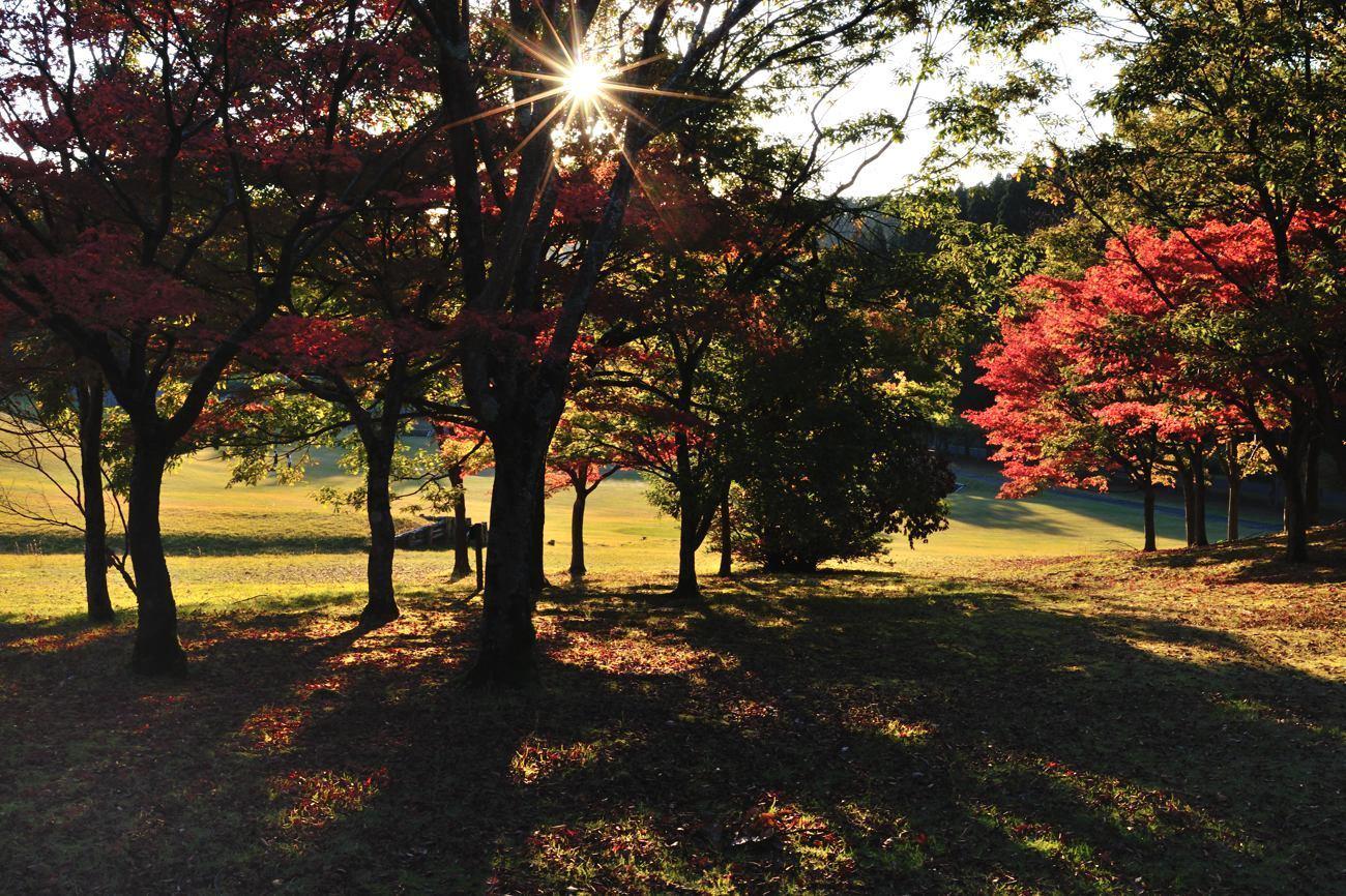 森林公園 今年の紅葉_c0220824_21505792.jpg