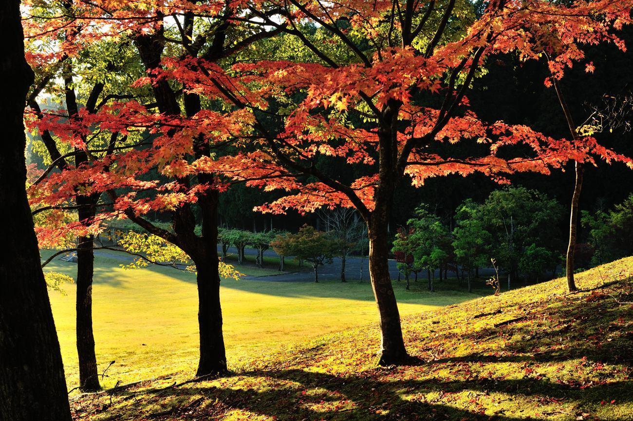 森林公園 今年の紅葉_c0220824_21510427.jpg