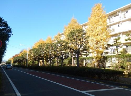青い空に.黄色.紅色..散歩です。_b0137932_16262993.jpg
