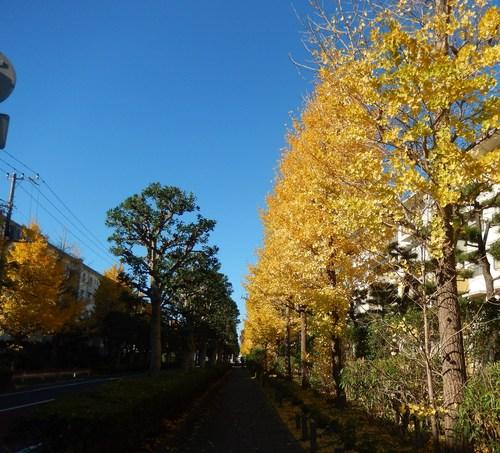 青い空に.黄色.紅色..散歩です。_b0137932_1627295.jpg