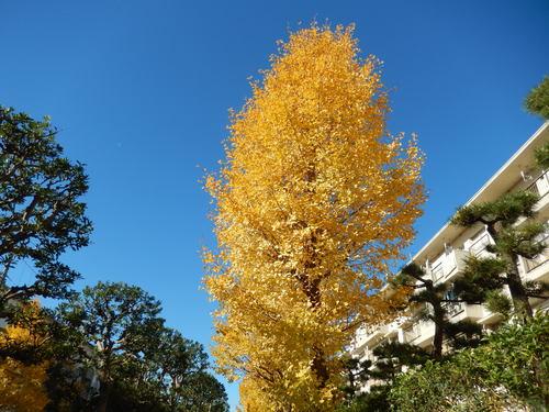 青い空に.黄色.紅色..散歩です。_b0137932_16274341.jpg