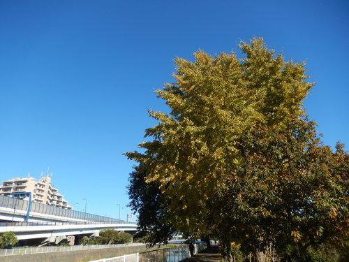 青い空に.黄色.紅色..散歩です。_b0137932_16295730.jpg
