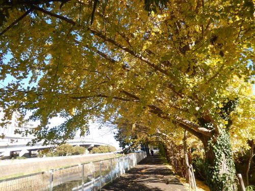 青い空に.黄色.紅色..散歩です。_b0137932_16301551.jpg