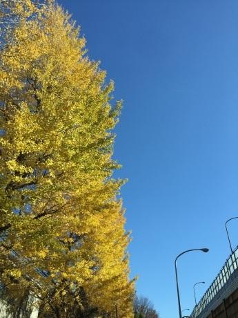 blog:今日の東京の空 #東京 #銀杏 #紅葉_a0103940_12142437.jpg