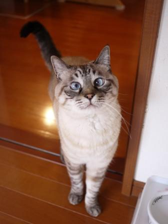 猫のお留守番 ギンくん編。_a0143140_238329.jpg