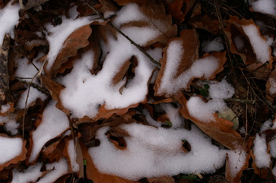 冬が来た!!_f0114346_1227212.jpg