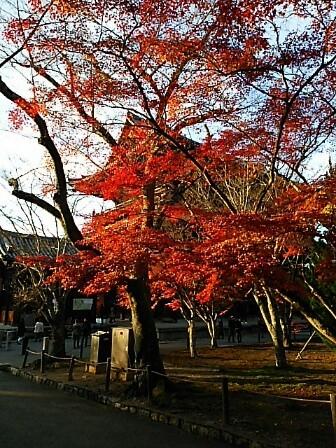 初冬の京都へ_c0055363_17190022.jpg