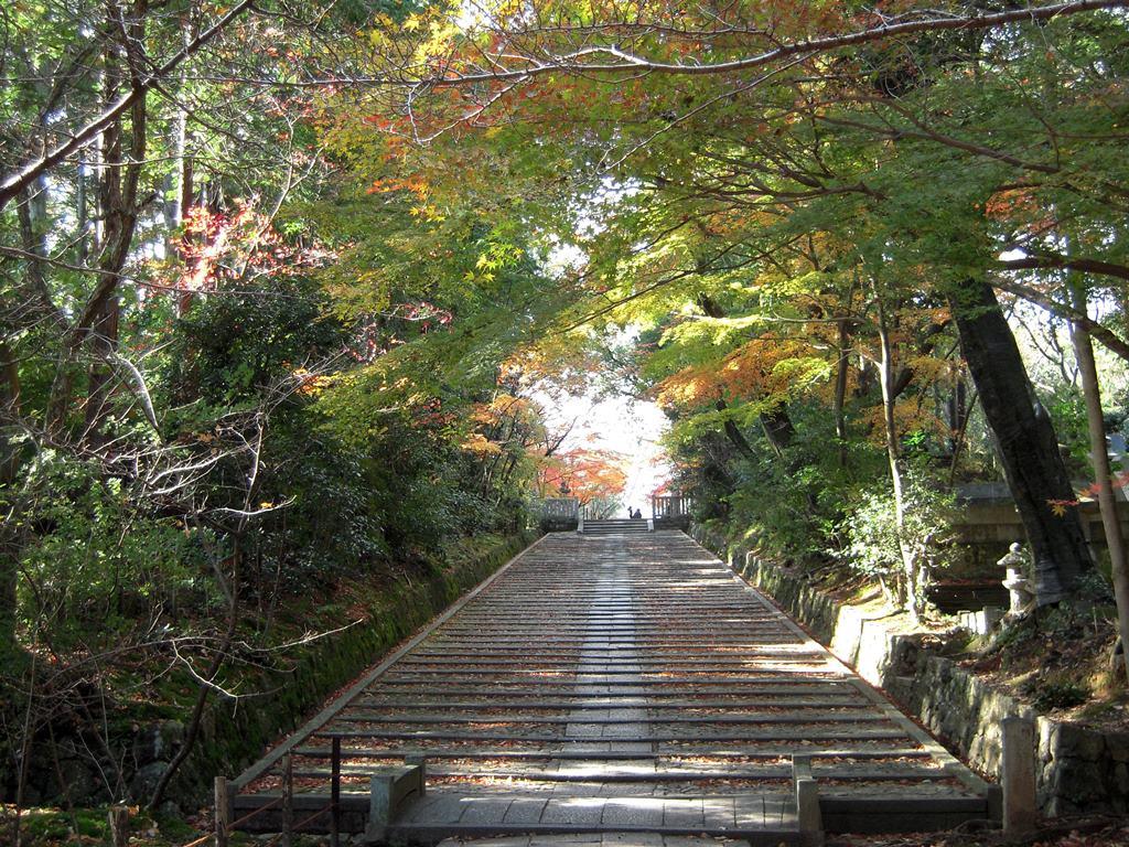 光明寺のもみじ 2015年12月4日_a0164068_157224.jpg