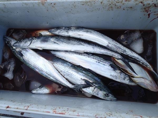 いまりマリーナの釣り大会♪_a0077071_13284056.jpg