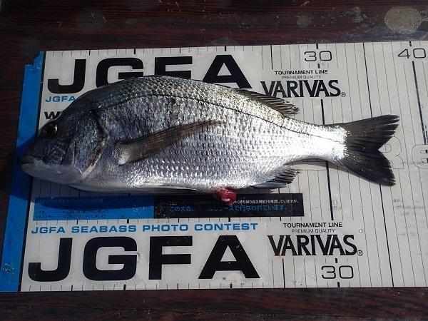 いまりマリーナの釣り大会♪_a0077071_13414238.jpg