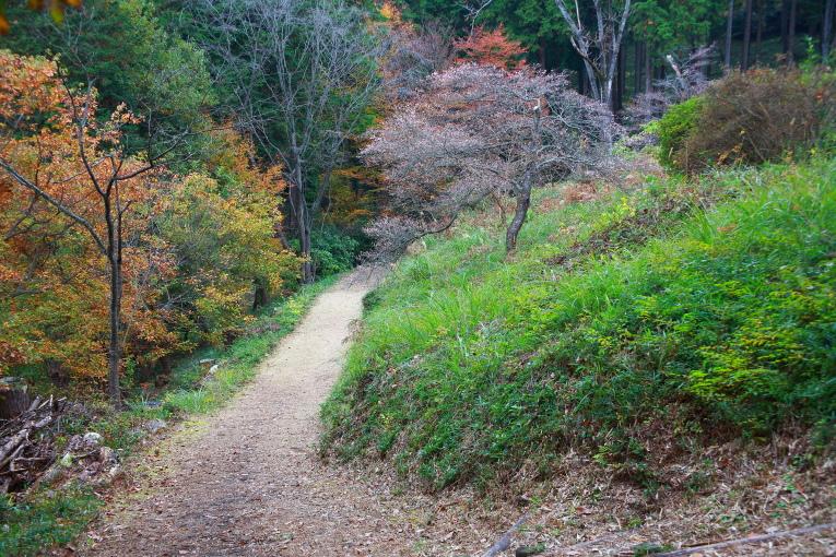 真岡市 根本山自然公園の紅葉 2_e0165983_15143288.jpg