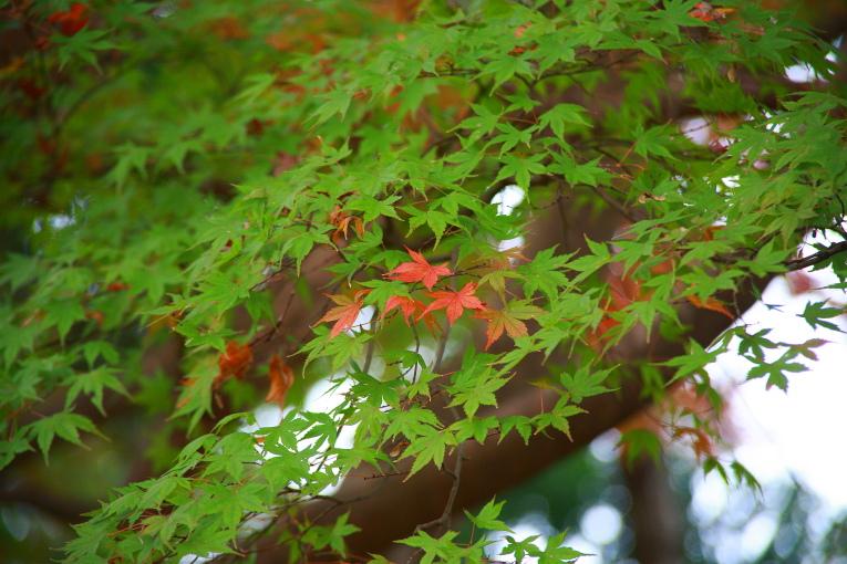 真岡市 根本山自然公園の紅葉 2_e0165983_1517177.jpg