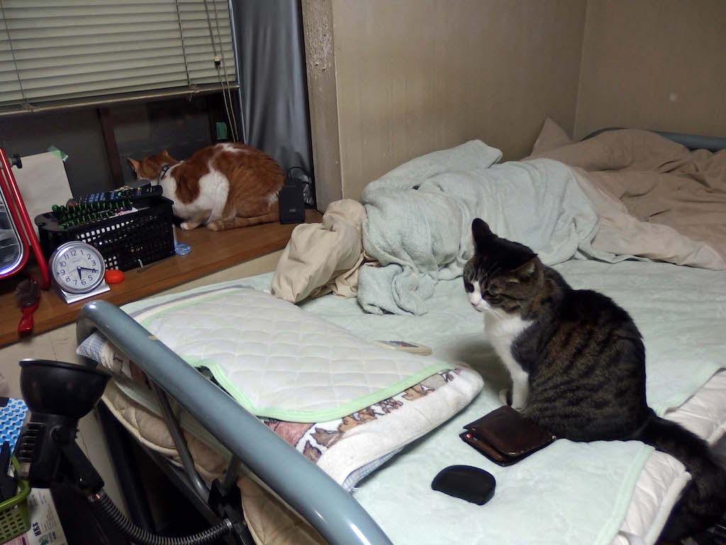 【猫】攻撃的に!_f0141609_18263846.jpg