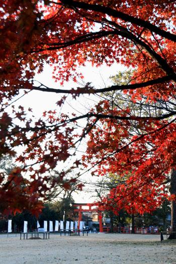 紅葉だより56 名残の紅葉 上賀茂神社_e0048413_18565753.jpg