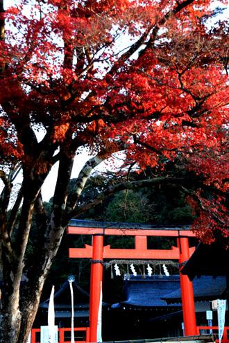 紅葉だより56 名残の紅葉 上賀茂神社_e0048413_18571353.jpg