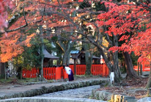 紅葉だより56 名残の紅葉 上賀茂神社_e0048413_18575433.jpg
