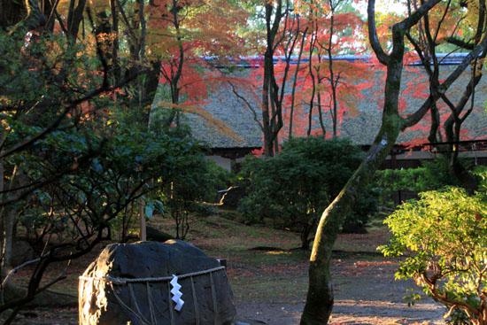 紅葉だより56 名残の紅葉 上賀茂神社_e0048413_18581889.jpg