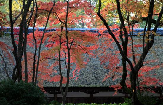 紅葉だより56 名残の紅葉 上賀茂神社_e0048413_1858309.jpg