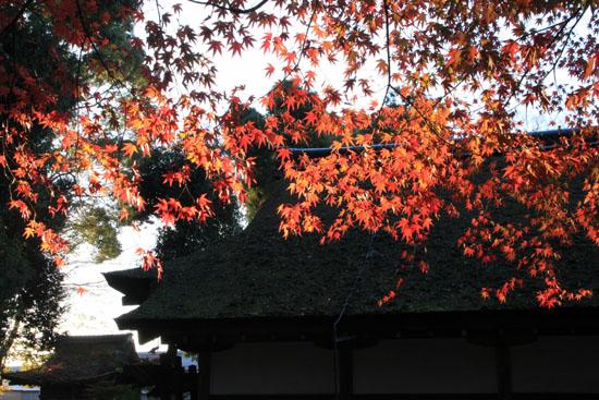 紅葉だより56 名残の紅葉 上賀茂神社_e0048413_18583927.jpg