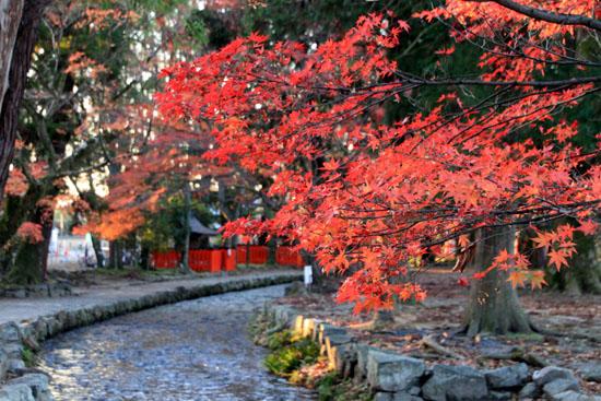 紅葉だより56 名残の紅葉 上賀茂神社_e0048413_1858847.jpg