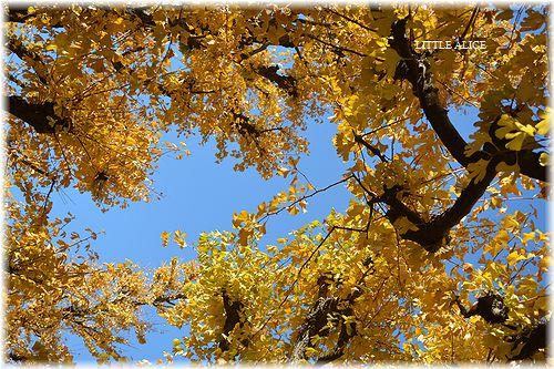 ☆黄色を求めて。_c0080132_11342537.jpg