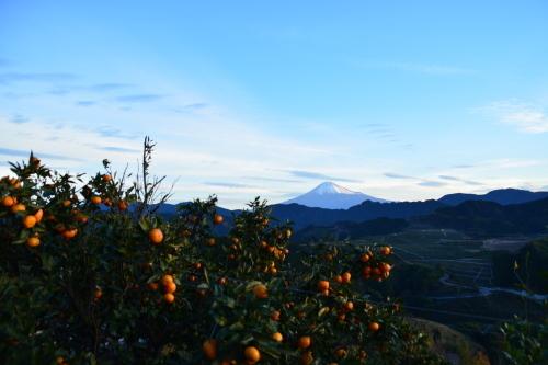 富士山三昧_d0285540_19481898.jpg